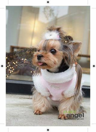 yorkie summer clothes 3